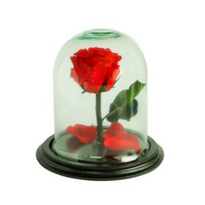 rosas eternas quito